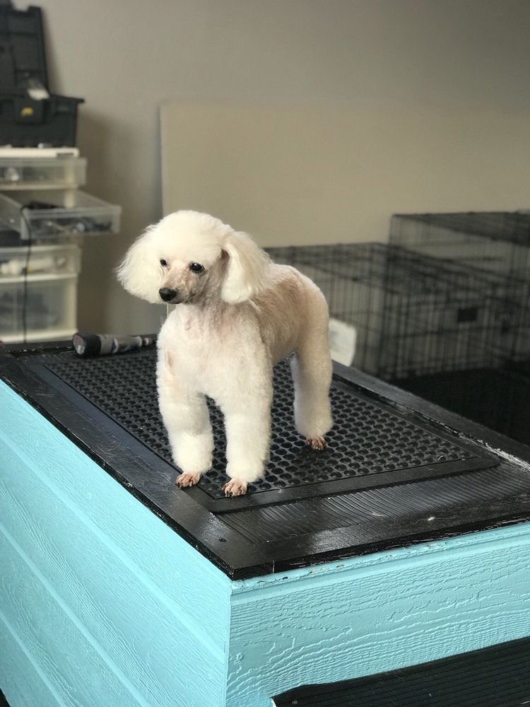 Elegant Dog Grooming: 5340 NW 185th Ave, Portland, OR