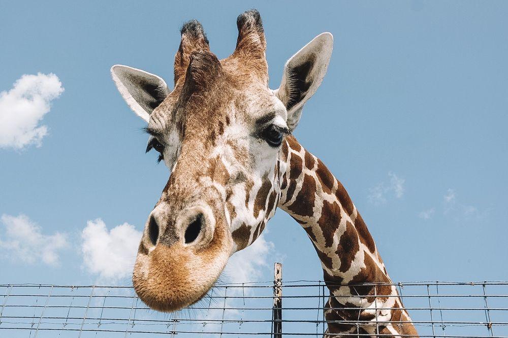 Tennessee Safari Park: 618 Conley Rd, Alamo, TN
