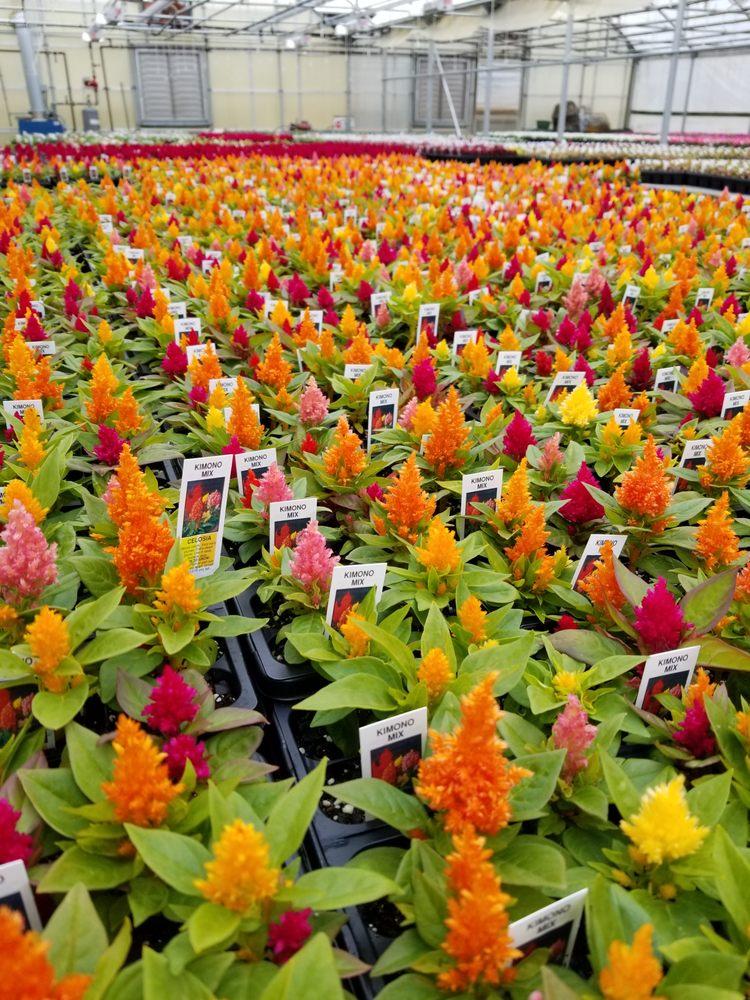 Tehan Greenhouses