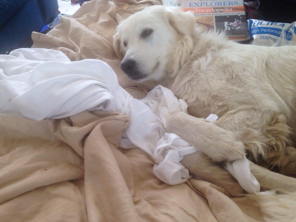 Family Dog Rescue San Francisco Ca