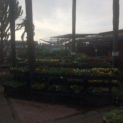 San Go Ca United States Plants Walter Andersen Nursery 53 Photos 128 Reviews Nurseries
