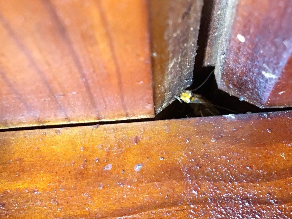 Duran's Pest Control: Tolleson, AZ