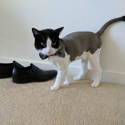 Shear Pets Mobile Cat Dog Grooming Salon