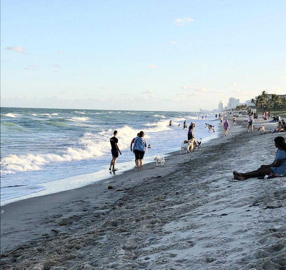 The Dog Beach of Hollywood: Custer St And Surf Rd, Hollywood, FL