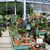 Photo Of Harlow Gardens   Tucson, AZ, United States. Cactus And Succulents