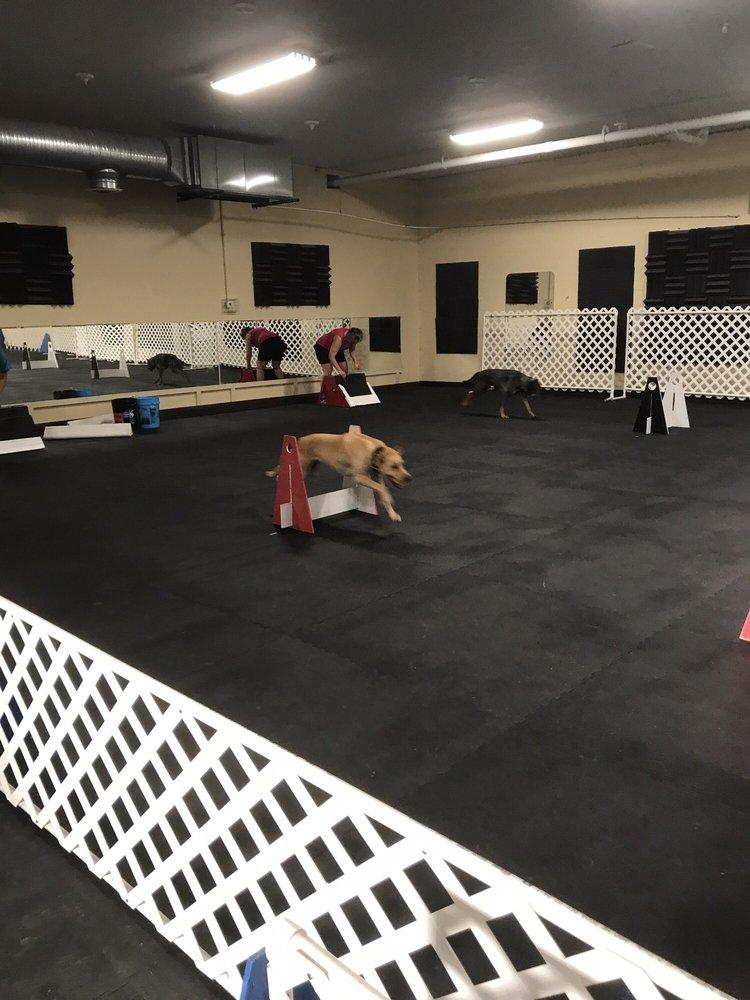 Pawsitive Partners Dog Training Center: 575 Main St, Beech Grove, IN