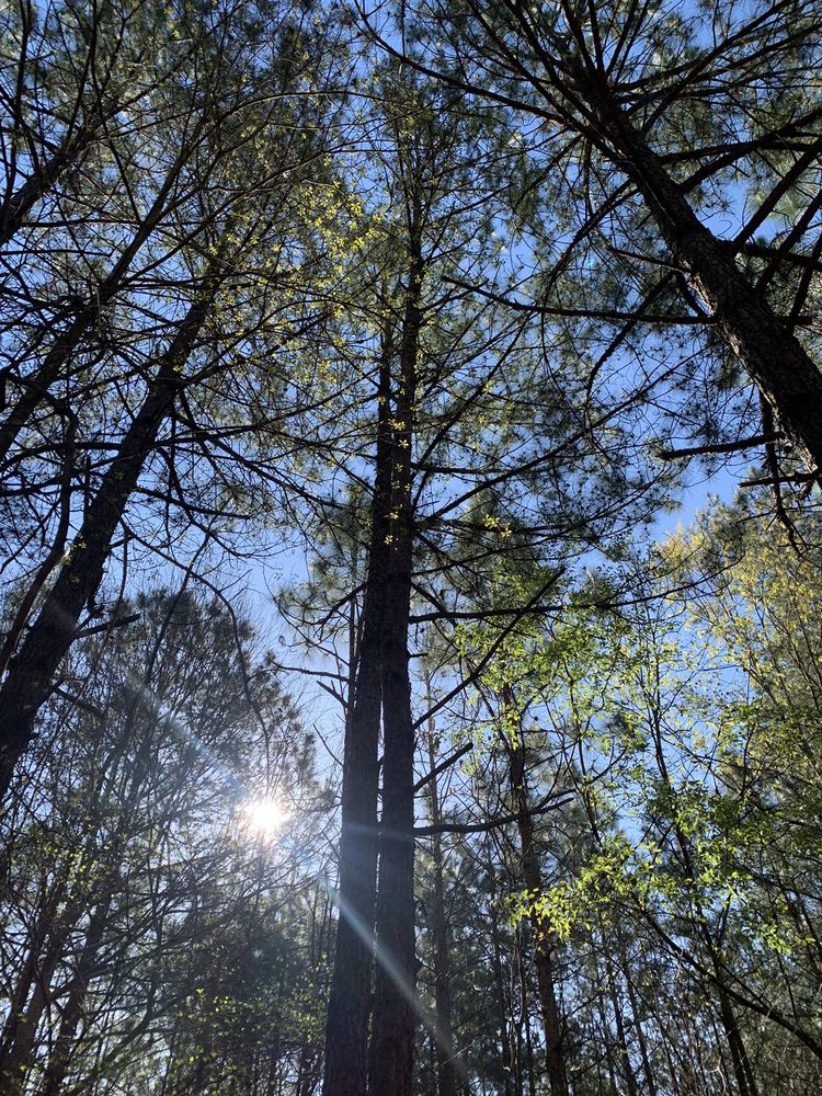 Clemmons State Forest: 2411 Old US Highway 70 W, Clayton, NC