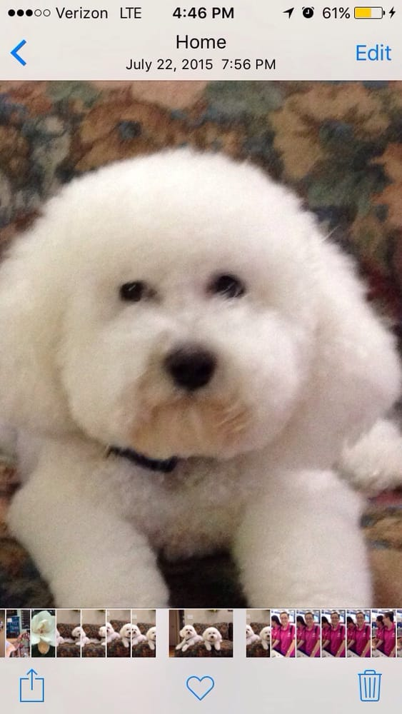 Country Puppy Dog Grooming Lakeland Fl