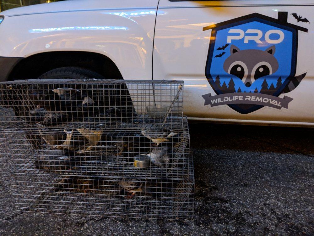 Pro Wildlife Removal