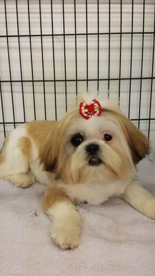 Wonderful Pets Grooming: 372 Vosseller Ave, Bound Brook, NJ