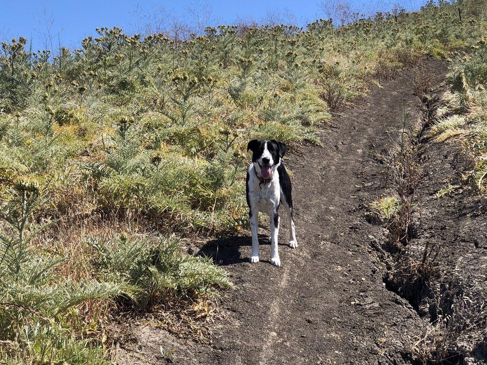 Las Ramblas Trail