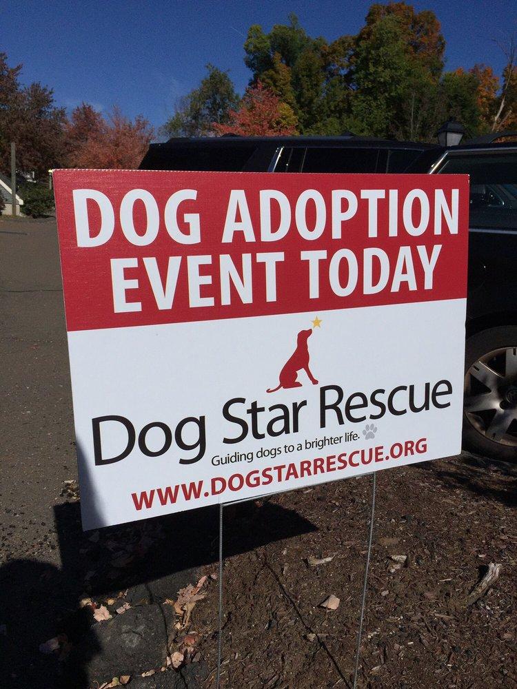 Dogology: 166 Albany Tpke, Canton, CT