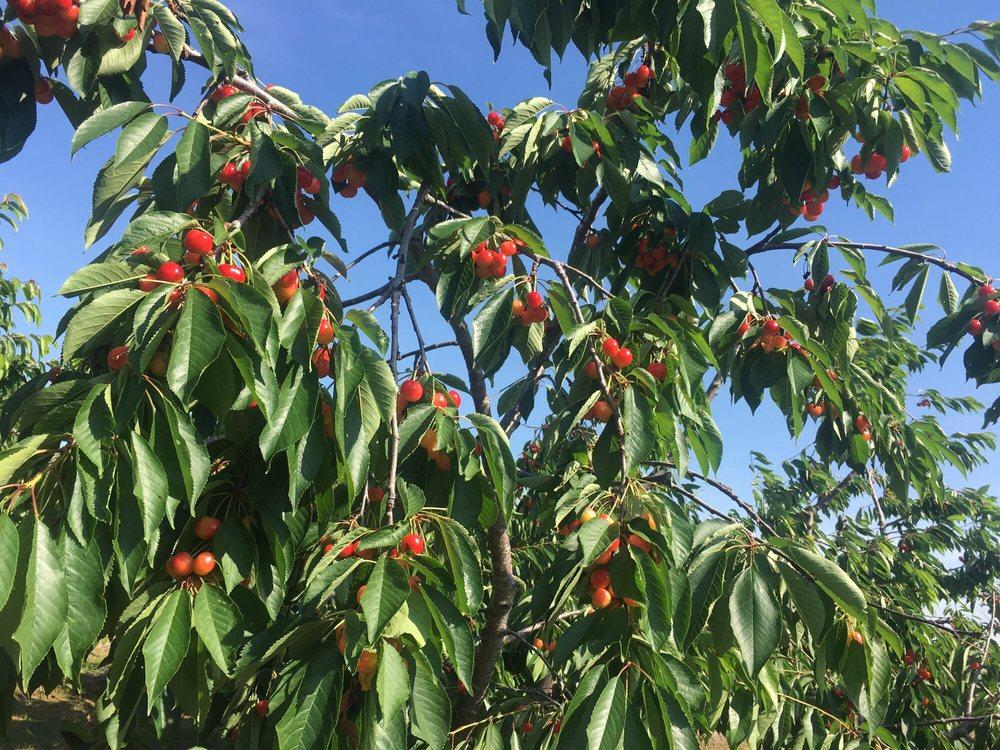 Eshleman Fruit Farm: 753 E Maple St, Clyde, OH