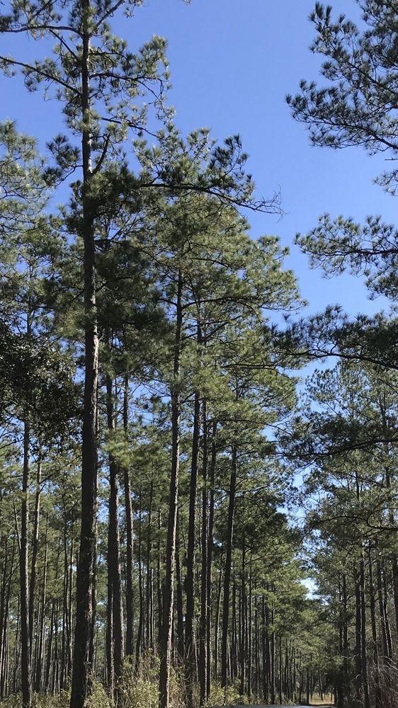 Lake Talquin State Forest: 865 Geddie Rd, Tallahassee, FL