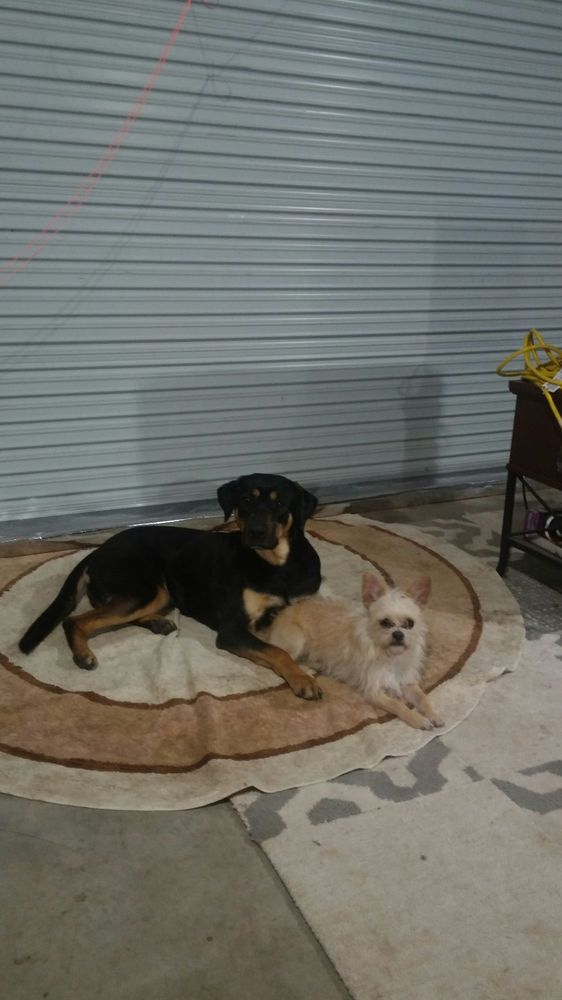 Pampered Paws Dog Hotel & Pet Sitting: 2245 E US Highway 82, Dodd City, TX