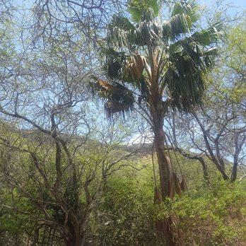 Photo Of Koko Crater Botanical Garden   Honolulu, HI, United States