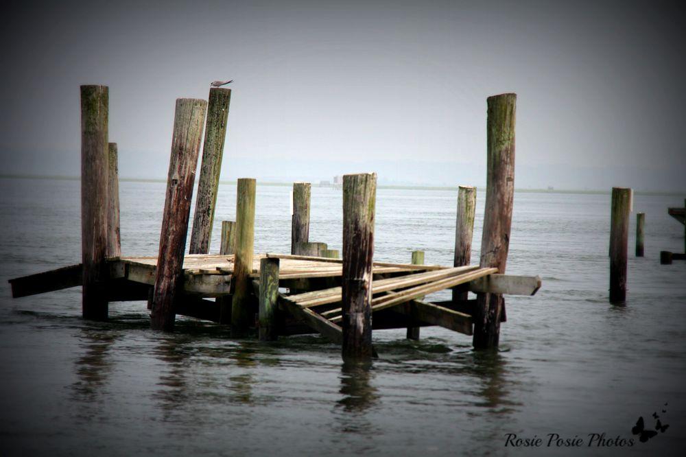 Salt Water Pony Tours: 2246 Curtis Merritt Harbor Dr, Chincoteague, VA