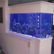 Photo Of Amazing Aquariums Daytona Beach Fl United States