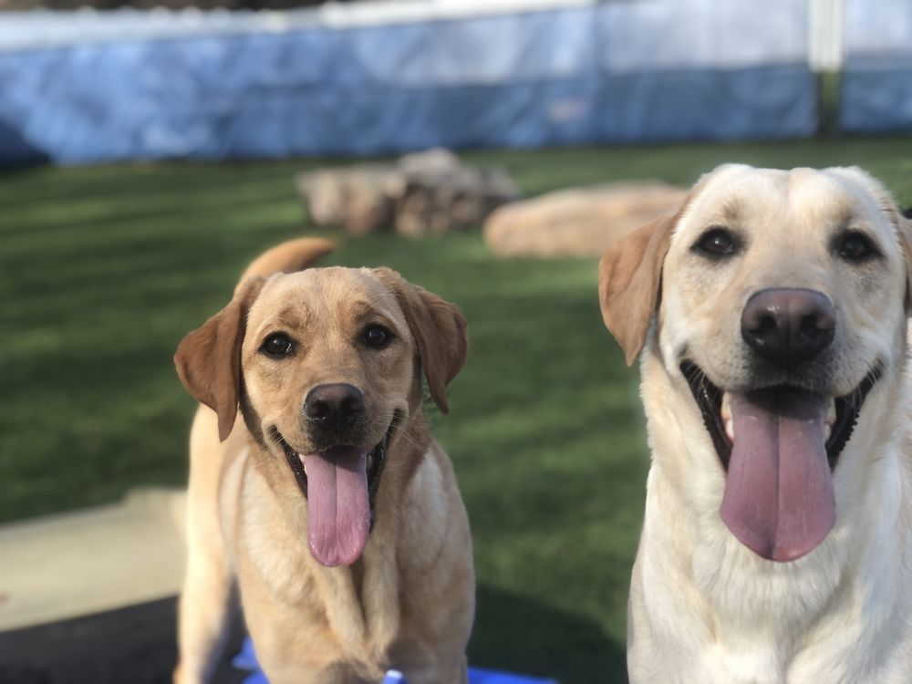 Pack Pet Resort: 101 Post Office Dr, Indian Trail, NC