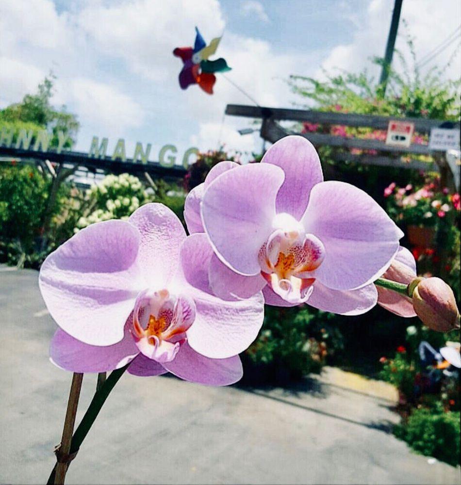 Johnny Mangos Garden Center: 2708 N Federal Hwy, Delray Beach, FL