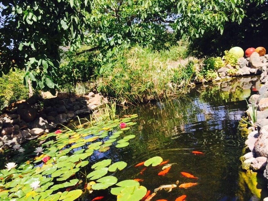 Loved their koi pond yelp for Koi ponds near me