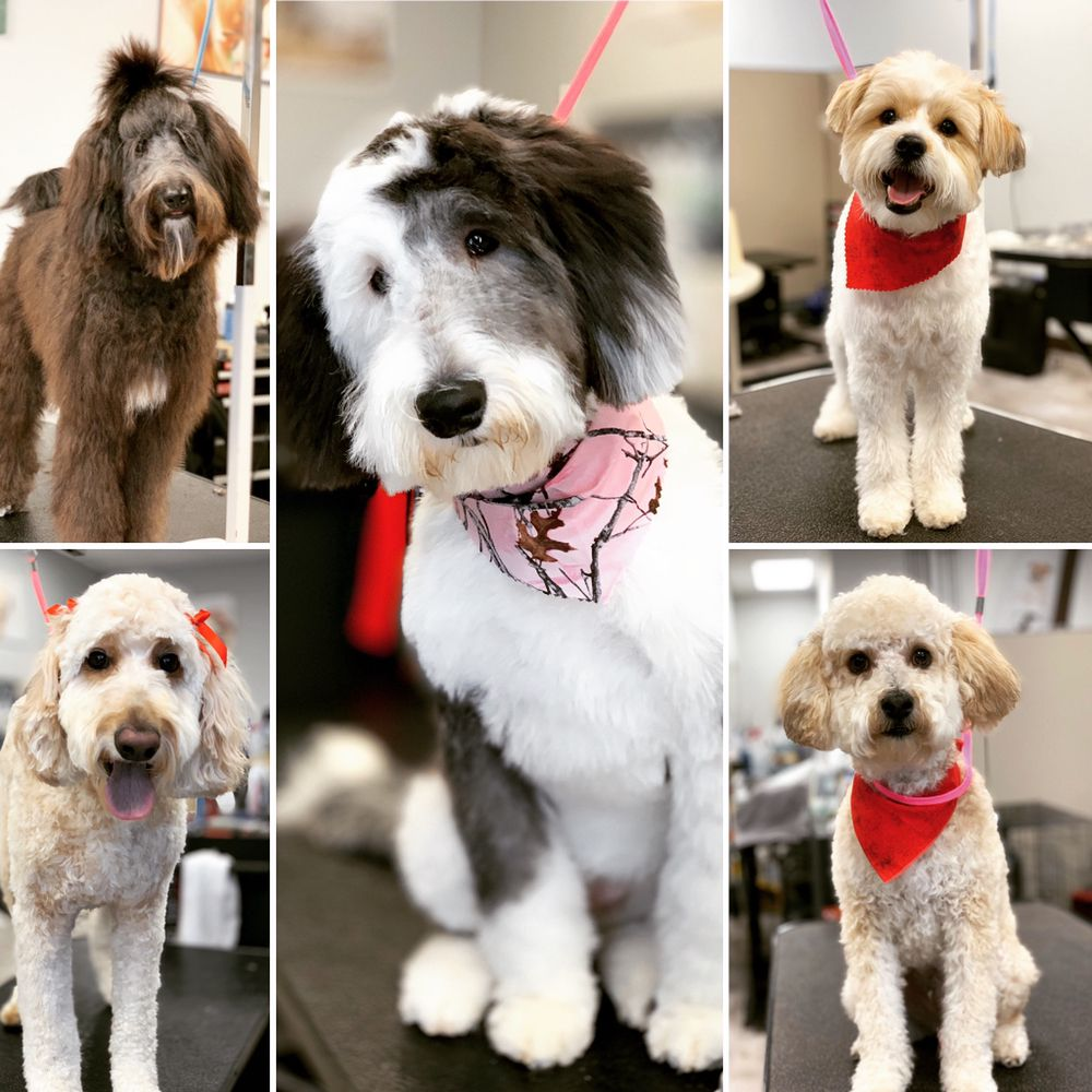Exclusively Dogs KC: 1060 NE Mcquerry Rd, Grain Valley, MO