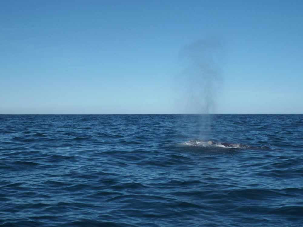 Whale's Tail Charters: Coast Guard Dr, Depoe Bay, OR