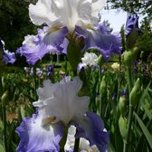 Photo Of Clark Botanic Garden   Albertson, NY, United States