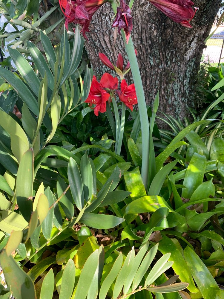 Green Jungle Nursery: 4116 S Goldenrod Rd, Orlando, FL