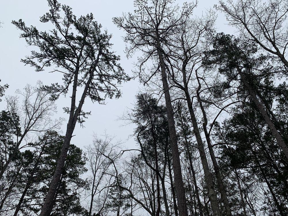 Atlanta Tree Allstars