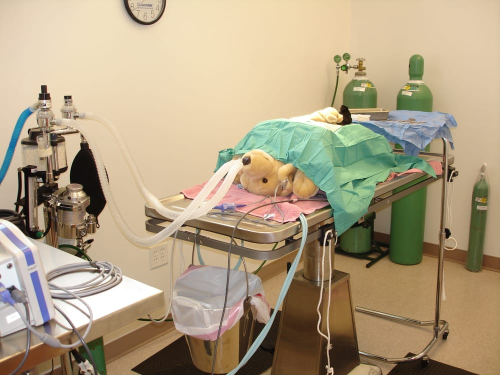Clarksburg Animal Hospital: 23321 Frederick Rd, Clarksburg, MD