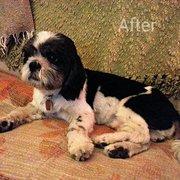 Rapawzel dog grooming 82 photos 61 reviews pet groomers 31 squeaky clean dog grooming solutioingenieria Choice Image