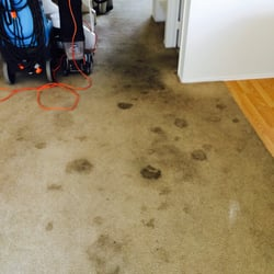 photo of moonlight carpet cleaning san diego ca united states