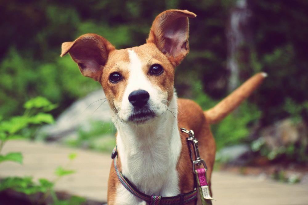Furever Dog Rescue Olympia