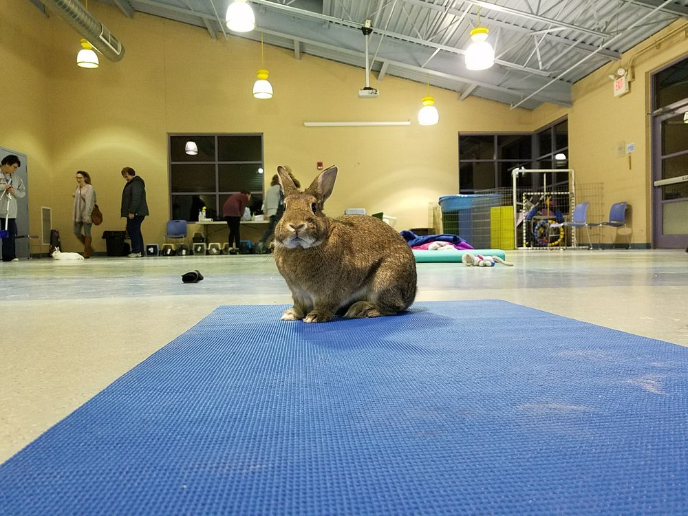 Animal Friends: 562 Camp Horne Rd, Pittsburgh, PA