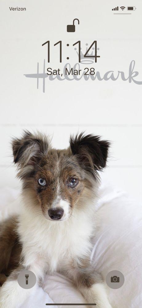 Pawsitive Pet Styles: 109 S Christian Str, Moundridge, KS