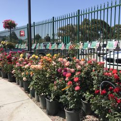 Photo Of Armstrong Garden Centers San Go Ca United States