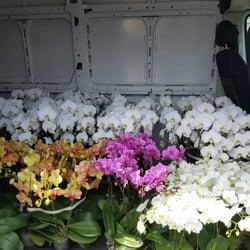 Photo Of Deep Roots Garden Center And Florist   Manhattan Beach, CA, United  States