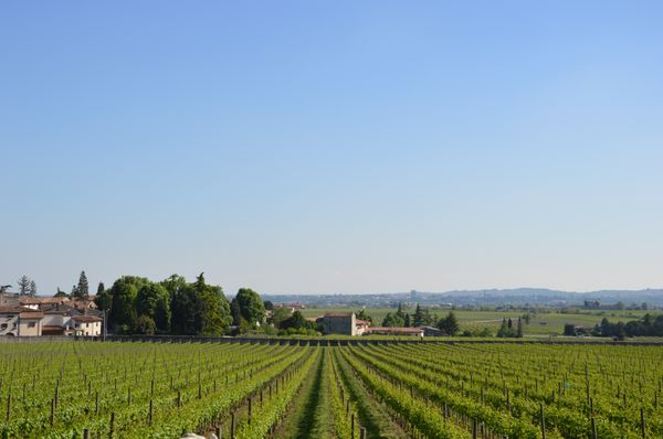 Pagus Wine Tours Verona