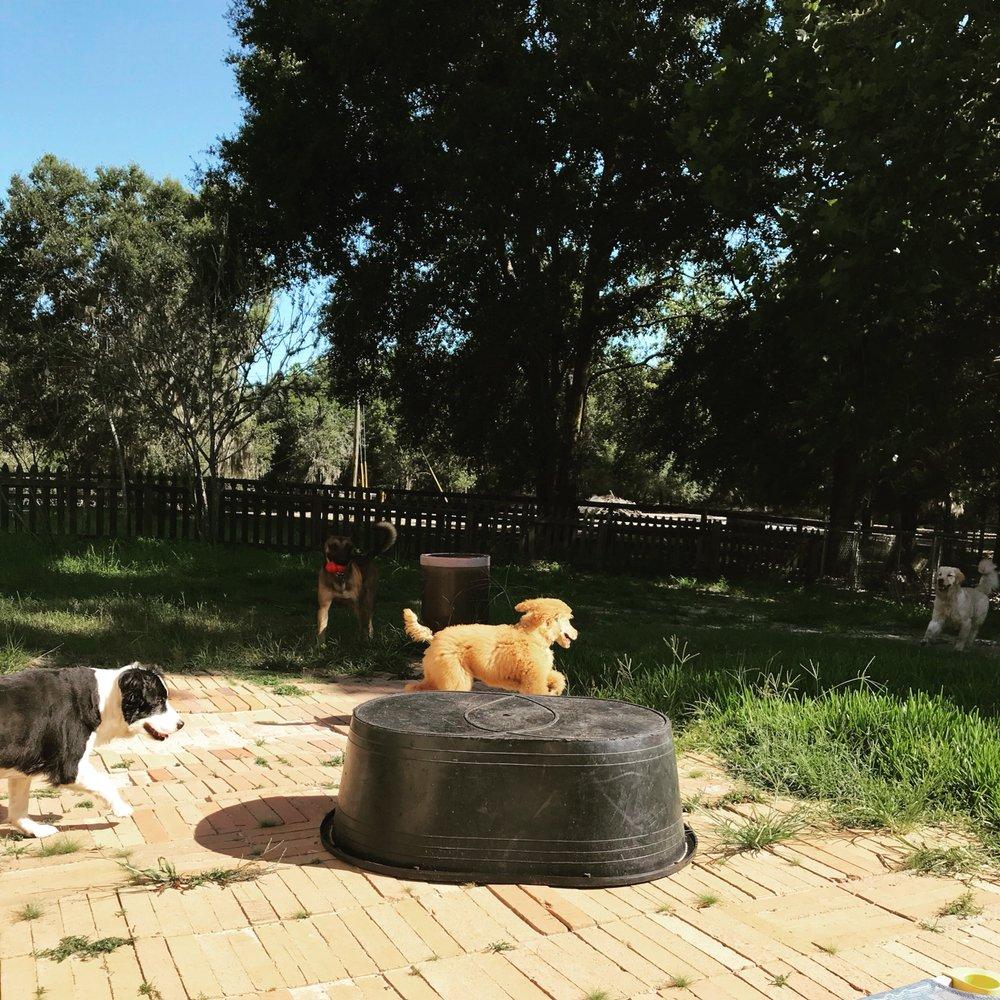 Dream Dogz - Central Florida Dog Training: 1990 S US 301, Sumterville, FL