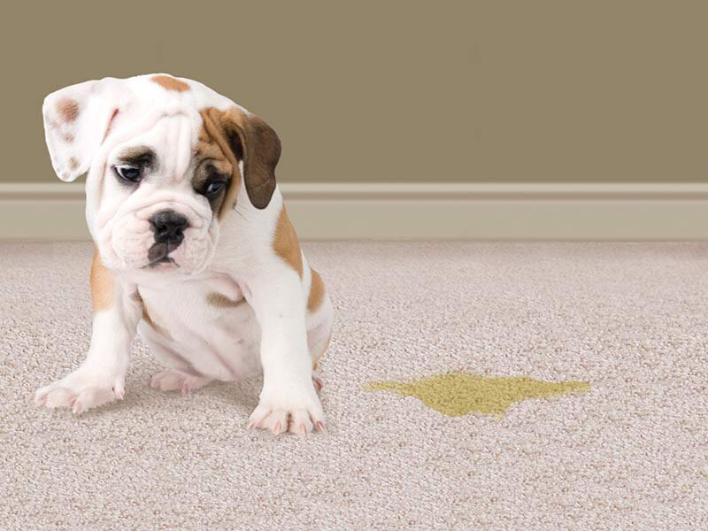 Carpet Cleaning Of Burleson: 925 South Willow Cir S, Burleson, TX
