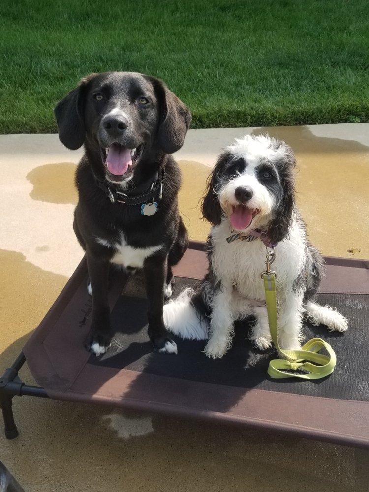 Wolffe Puppy Training: Aldie, VA