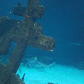 shark reef aquarium 2692 photos 918 reviews aquariums 3950 s