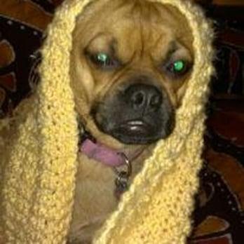 Ruff Love Dogs 16 Photos Amp 27 Reviews Pet Sitting