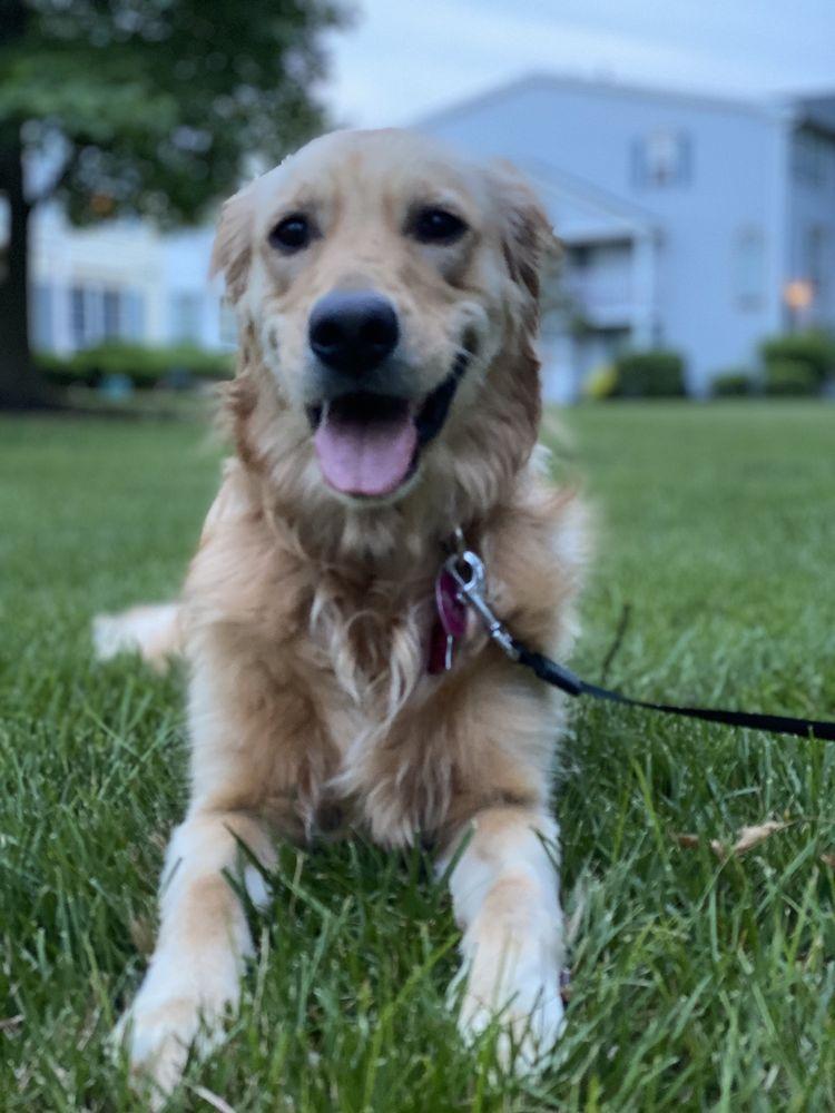 In Command Dog Training: 721 N Harrisburg St, Steelton, PA