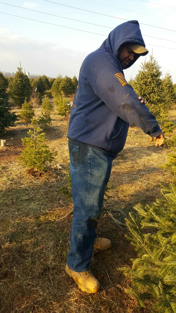 Clark's Christmas Tree Farm - Christmas Trees - 235 Pusey Mill Rd,  Cochranville, PA - Phone Number - Last Updated January 9, 2019 - Yelp - Clark's Christmas Tree Farm - Christmas Trees - 235 Pusey Mill Rd