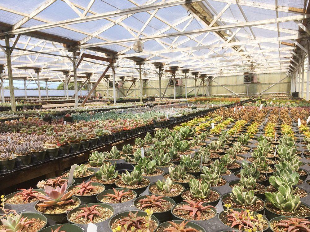 Succulent Gardens: 2133 Elkhorn Rd, Castroville, CA