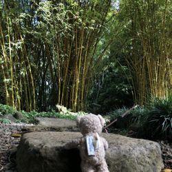 Wahiawa Botanical Garden   672 Photos U0026 83 Reviews ...