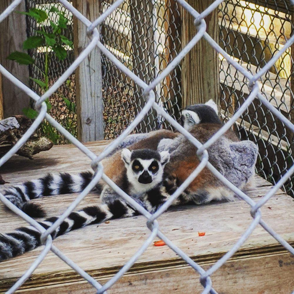Back To Nature Wildlife Refuge: 10525 Clapps Simms Duda Rd, Orlando, FL