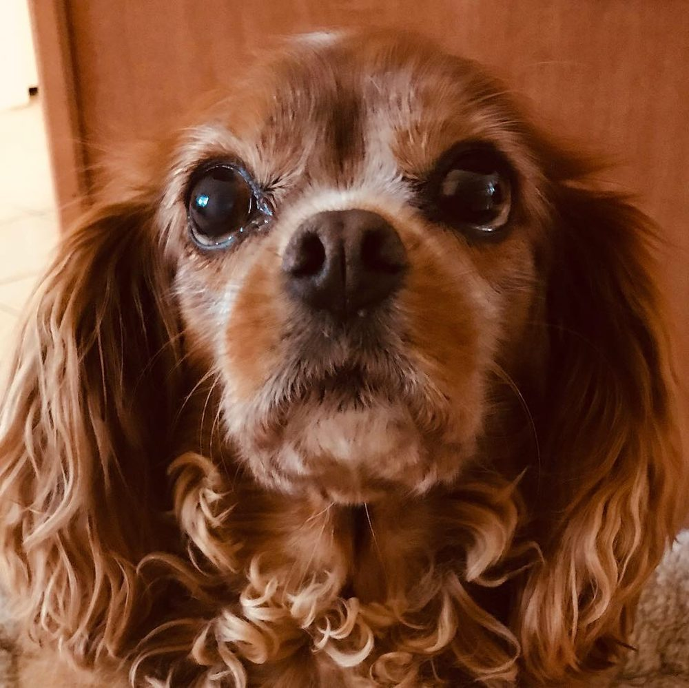 Reese's Pet Sitting - Austin, TX - 2019 All You Need to Know